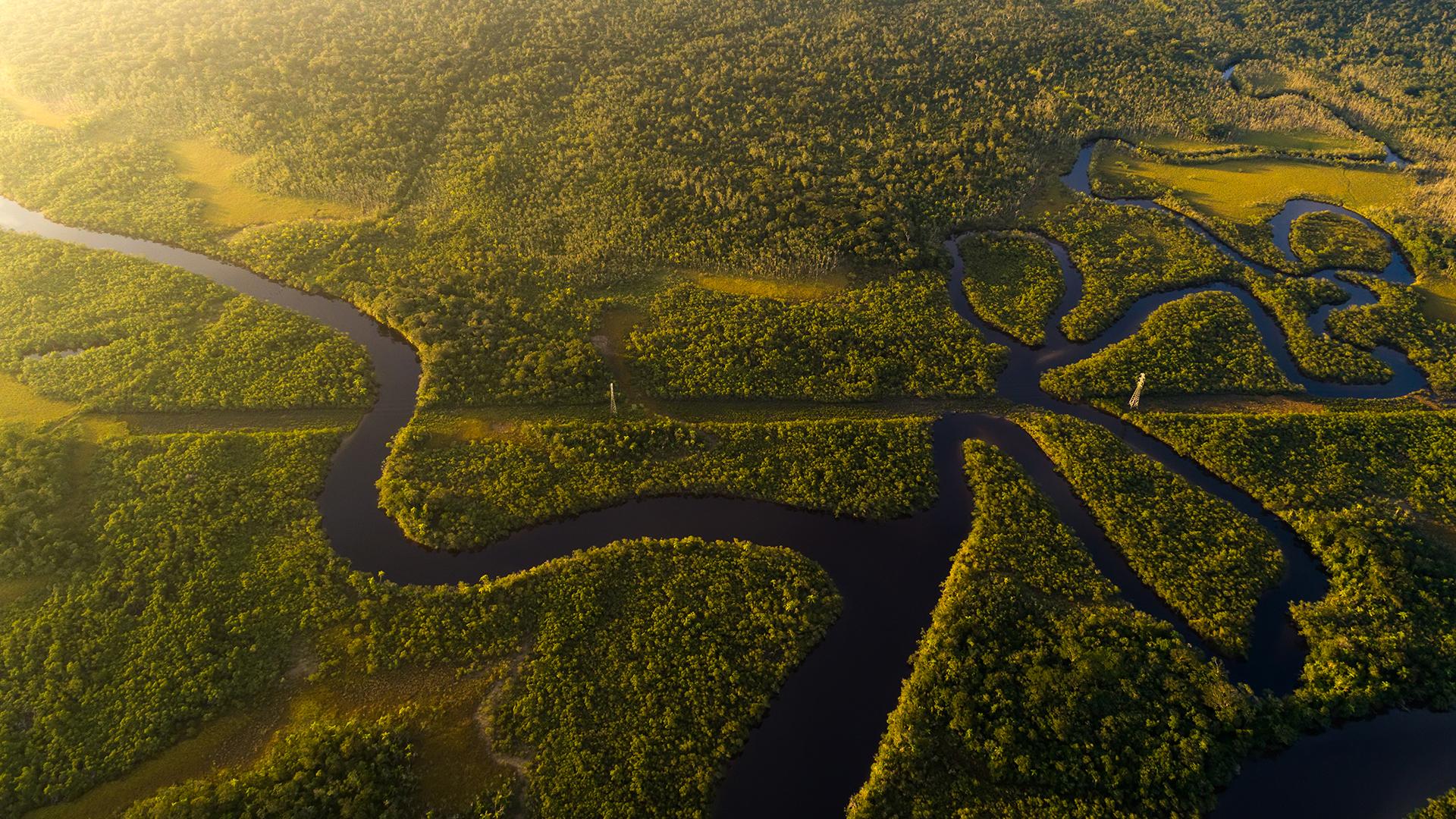 vista dall'alto della foresta amazzonica