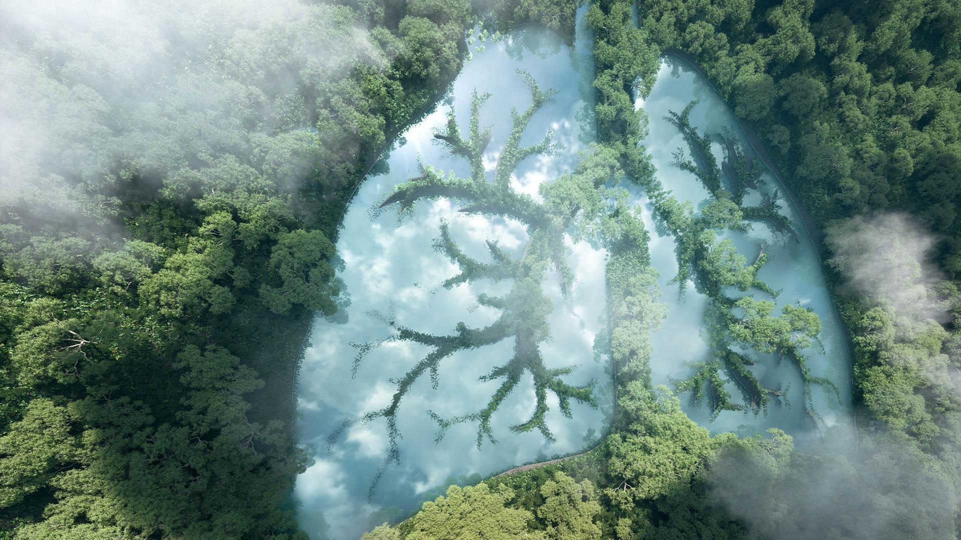Foresta amazzonica vista dall'alto con effetto grafico